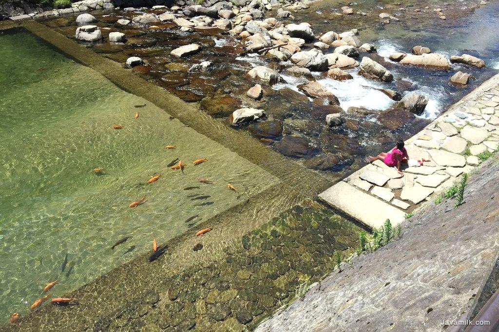 Air jernih dan dingin, banyak ikan, celup kaki